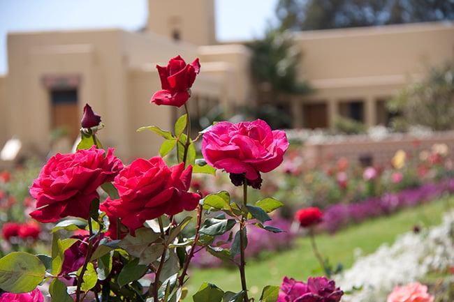 rose-garden-1