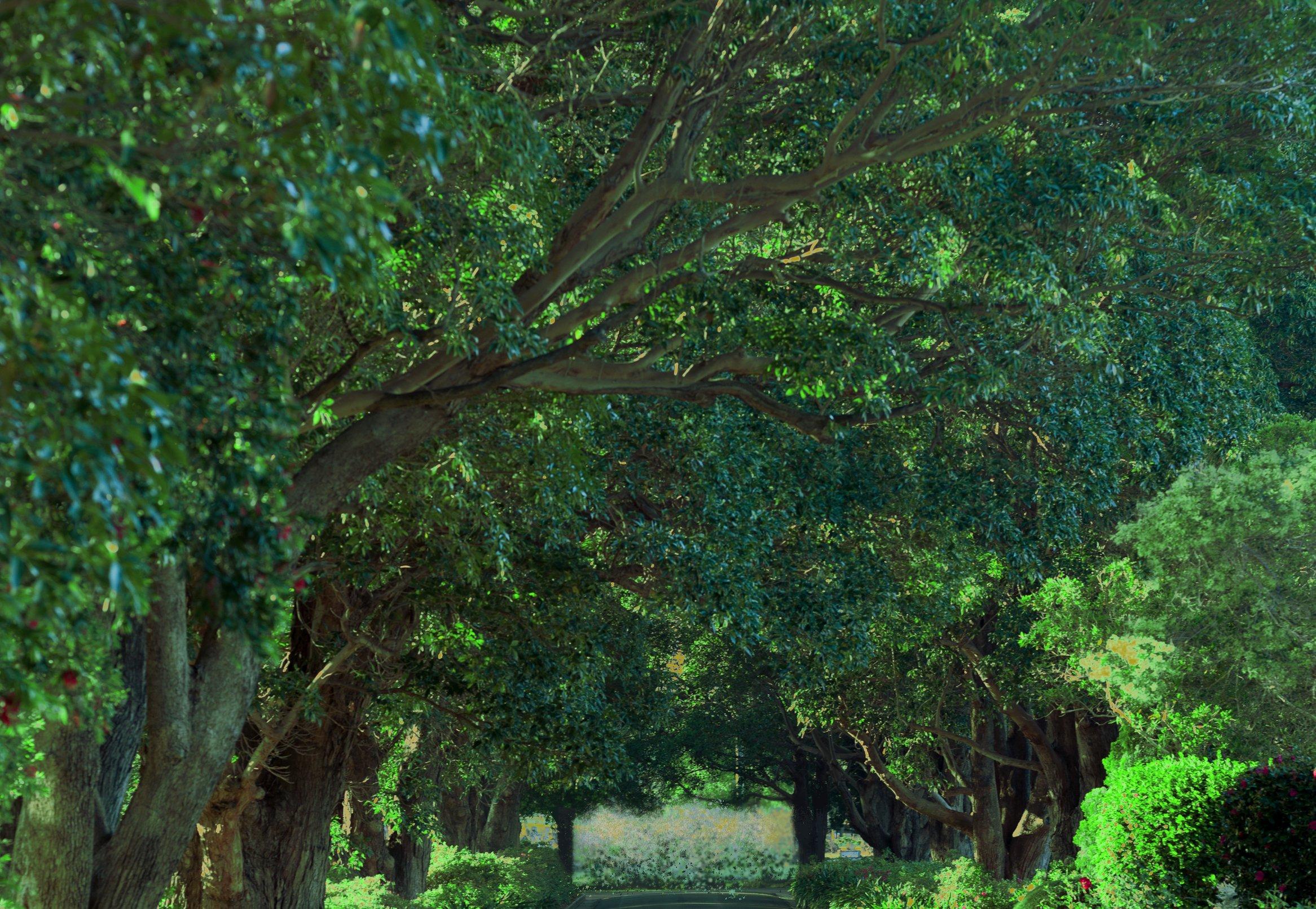 trees_47A2089